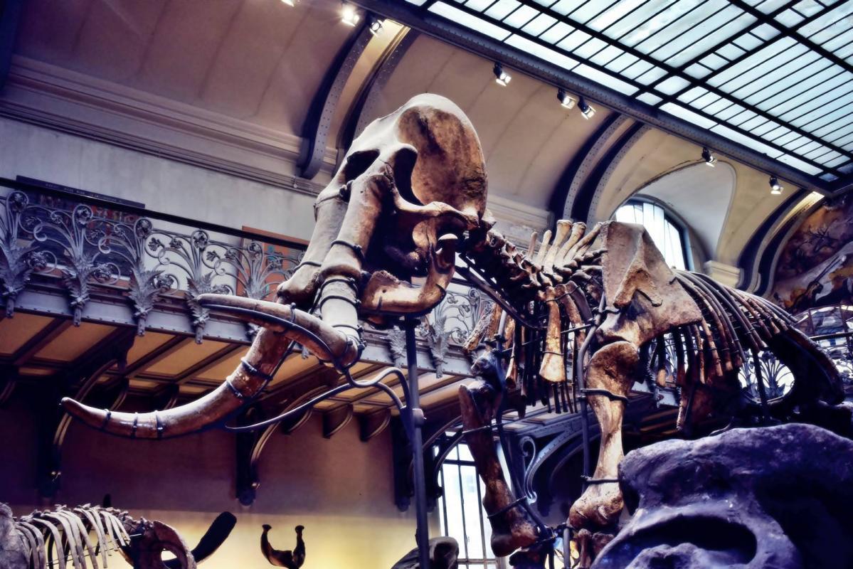 Museum d histoire naturelle paris 17