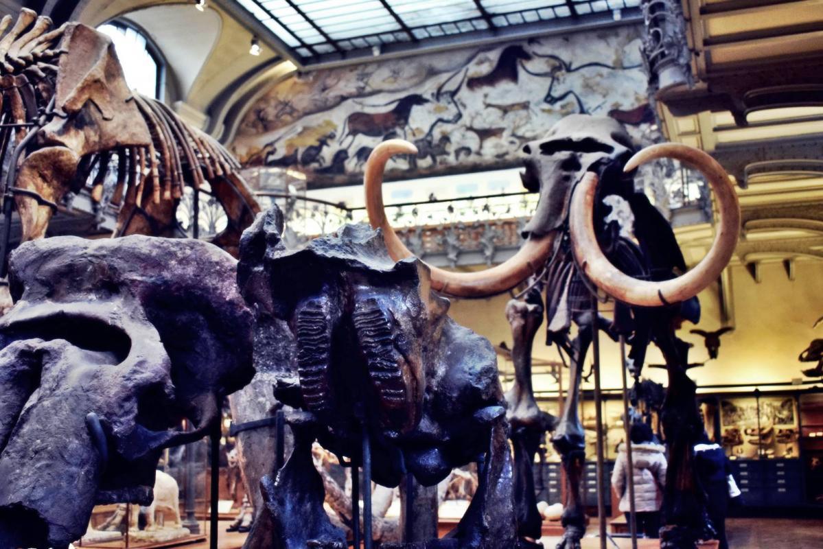 Museum d histoire naturelle paris 18