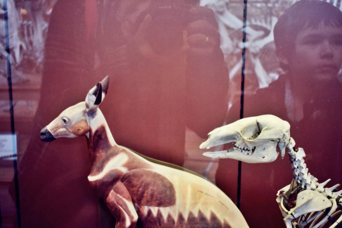 Museum d histoire naturelle paris 2