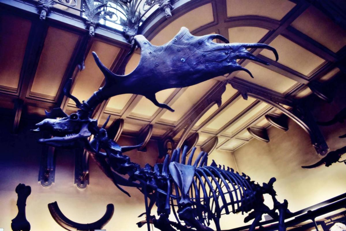 Museum d histoire naturelle paris 20