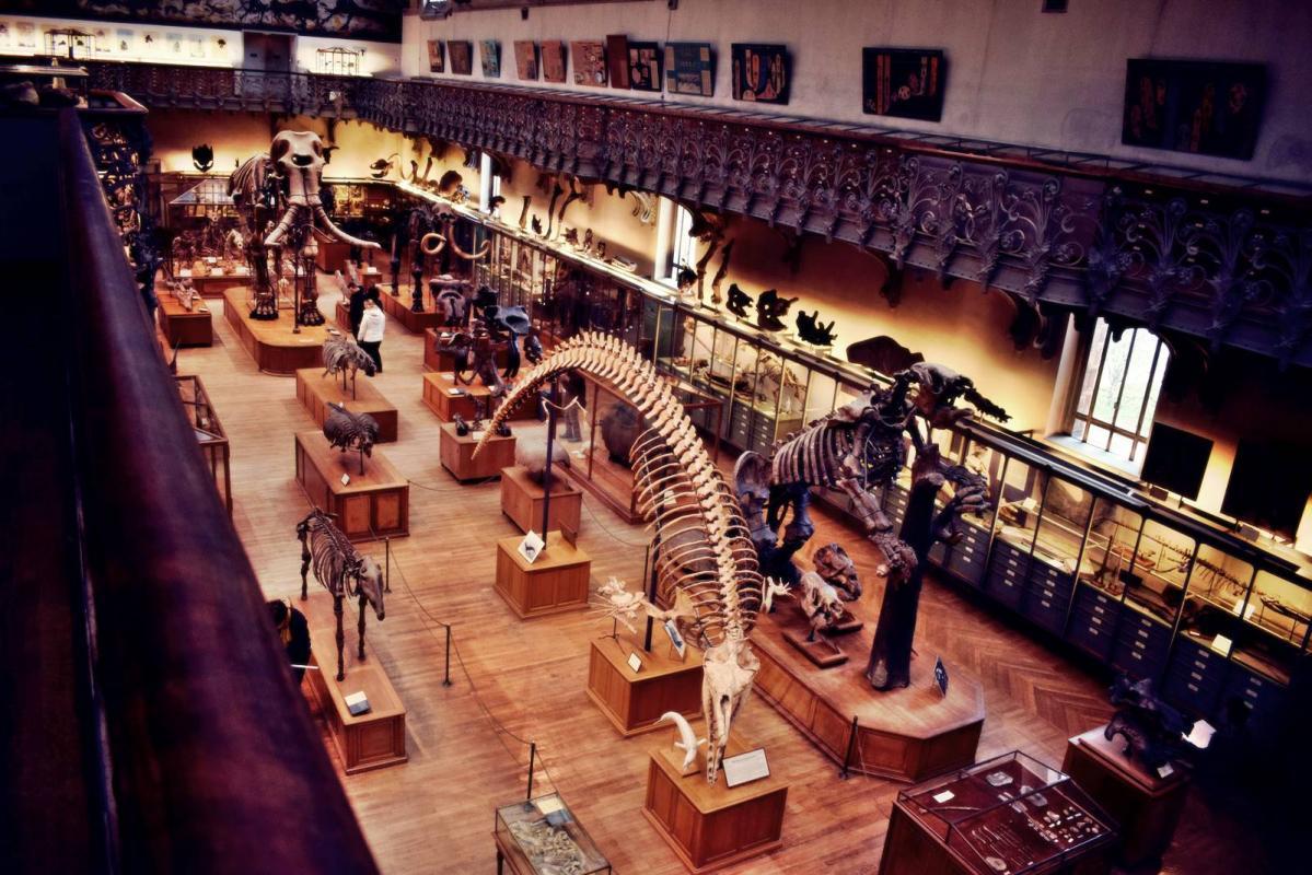 Museum d histoire naturelle paris 22