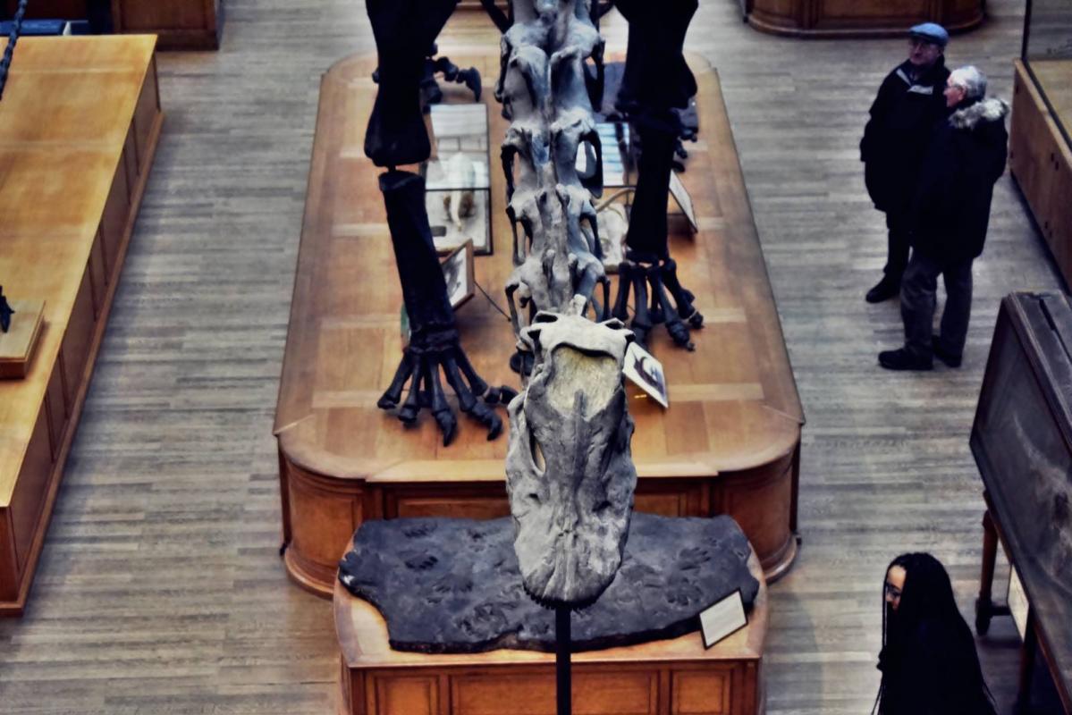 Museum d histoire naturelle paris 25