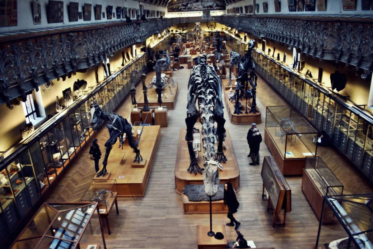 Museum d histoire naturelle paris 26