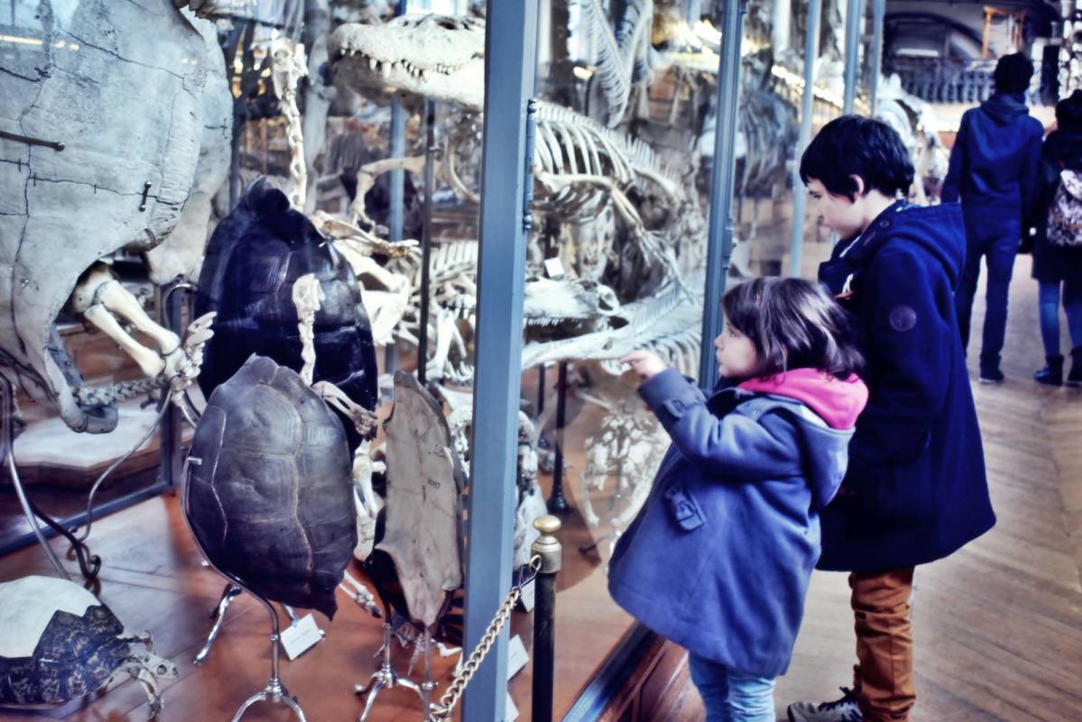 Museum d histoire naturelle paris 4