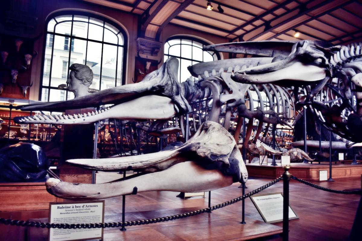 Museum d histoire naturelle paris 7