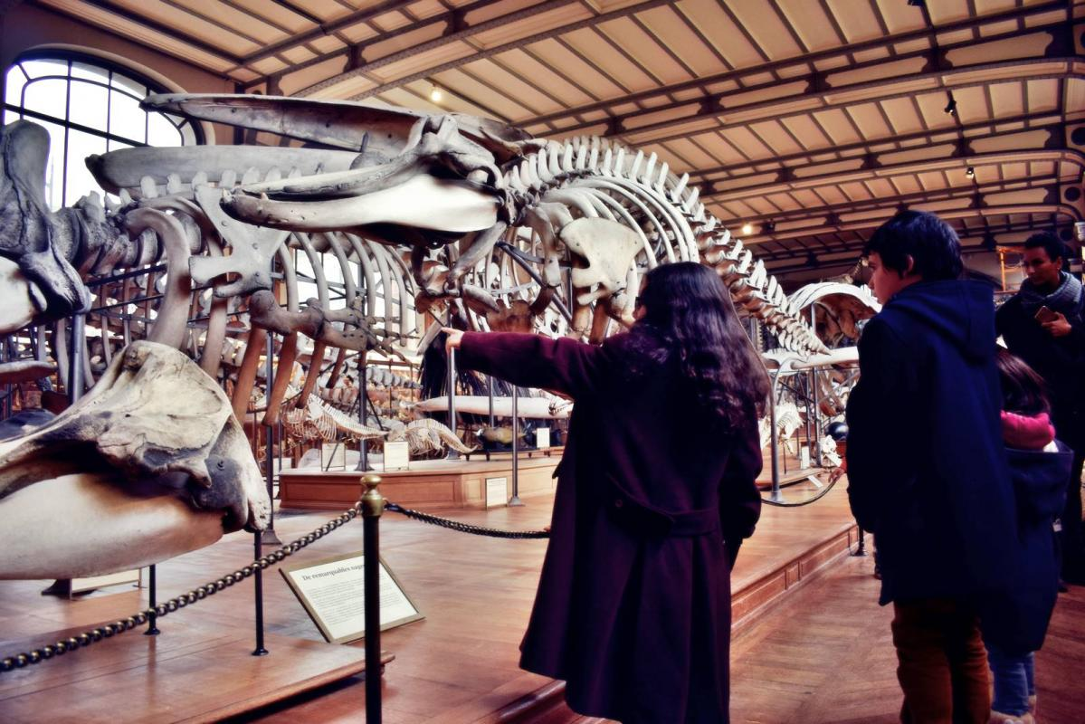 Museum d histoire naturelle paris 8