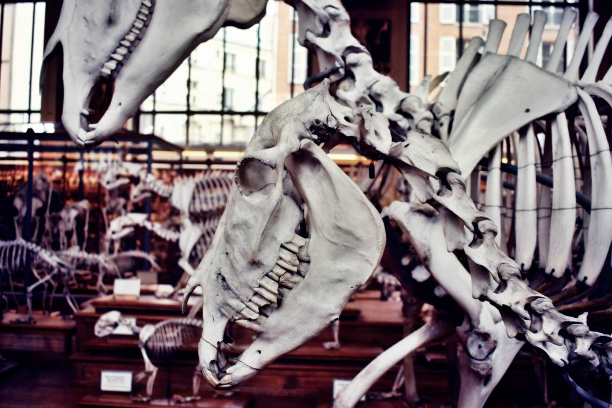 Museum d histoire naturelle paris