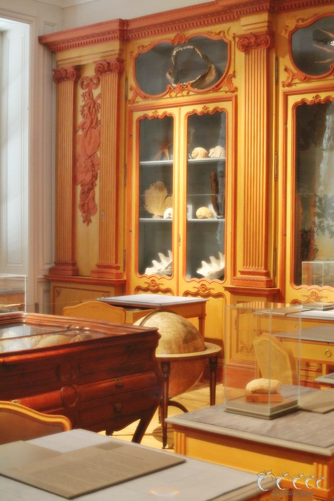 Museum d histoire naturelle rochelle 1