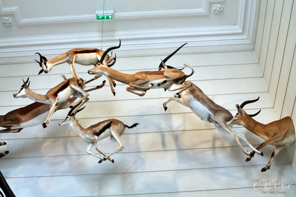 Museum d histoire naturelle rochelle 2