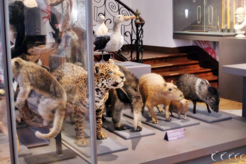 Museum d histoire naturelle rochelle 3