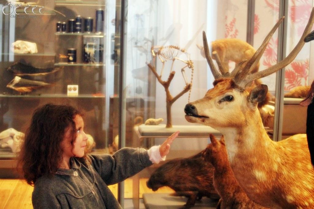 Museum d histoire naturelle rochelle 4