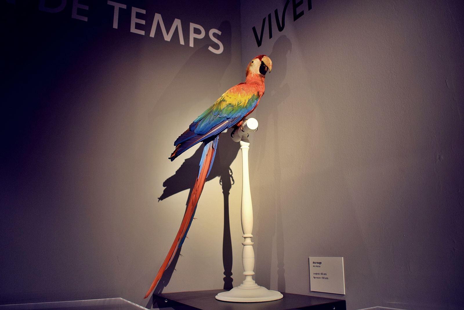 Nantes museum d histoire naturelle loire atlantique 1