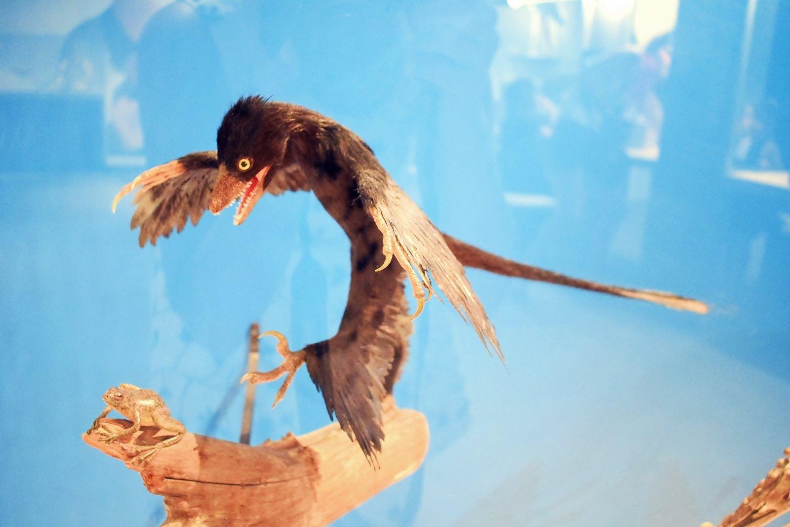 Nantes museum d histoire naturelle loire atlantique 3