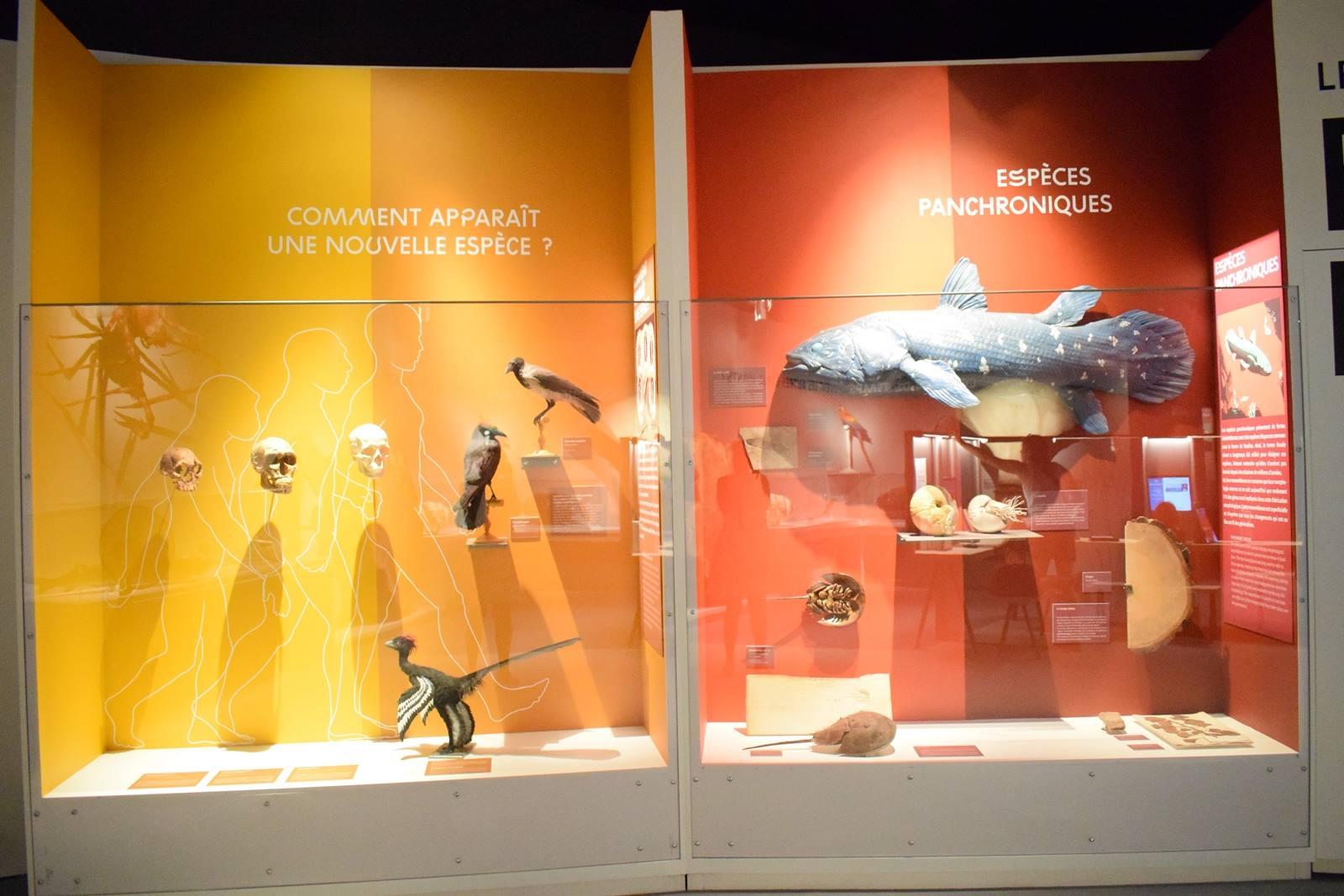 Nantes museum d histoire naturelle loire atlantique 4