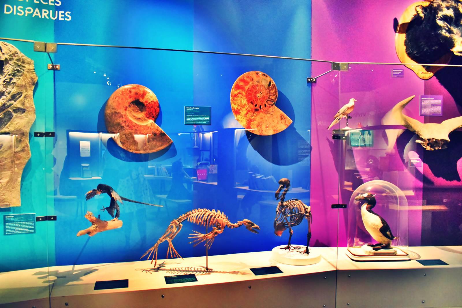 Nantes museum d histoire naturelle loire atlantique 5