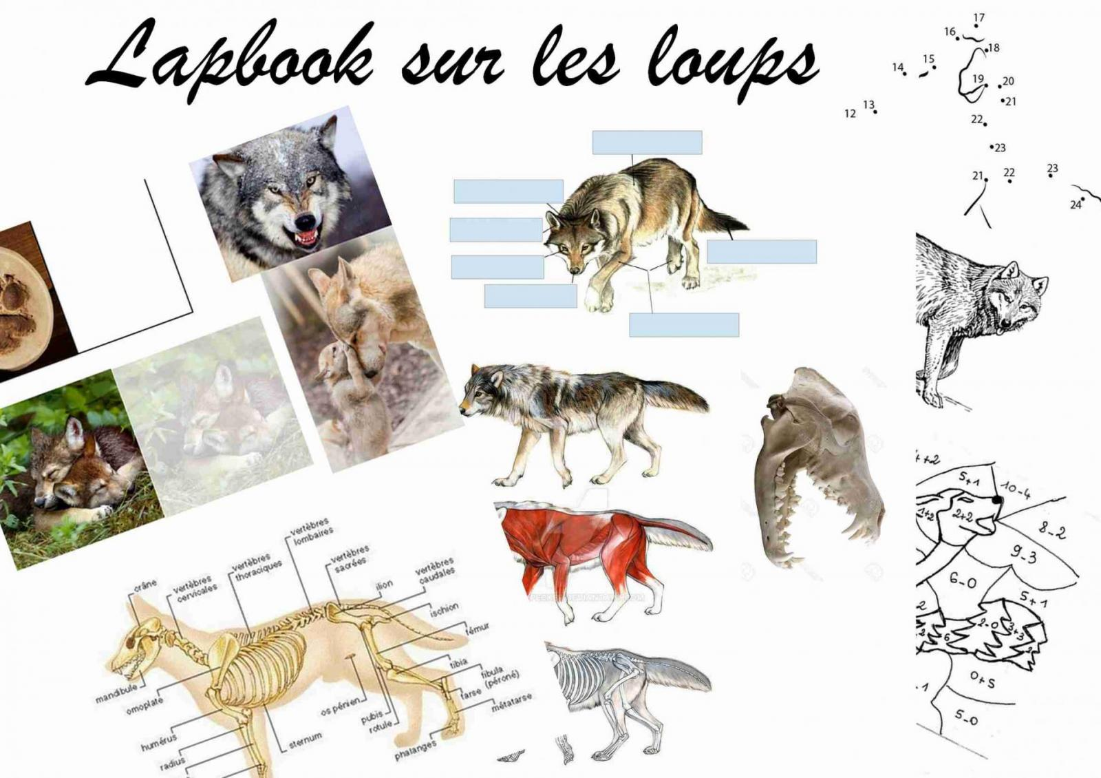 Photo lapbook sur les loups