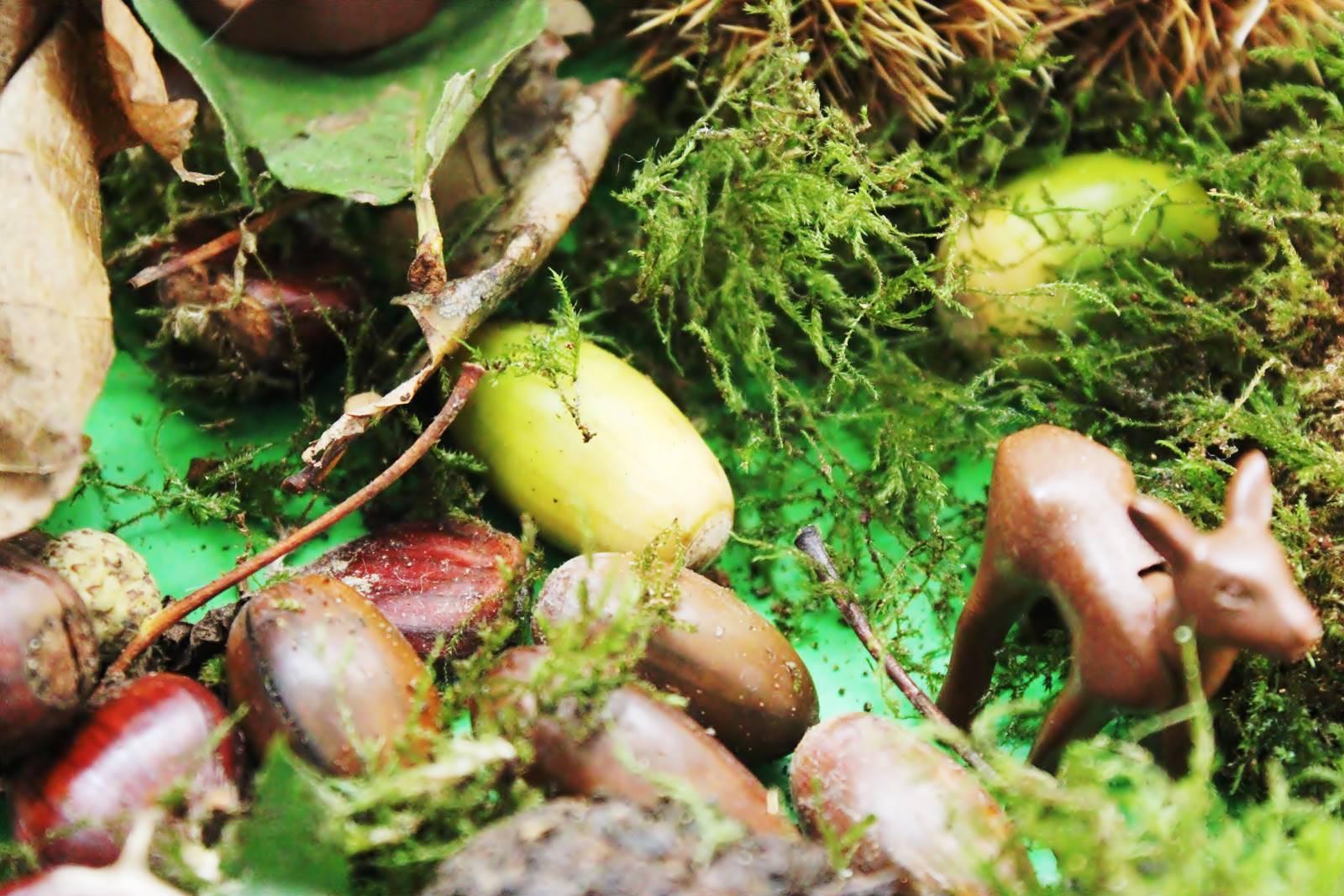 Table des saisons steiner waldorf ief homescooling ecole maison automne 6