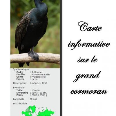 Carte grand cormoran