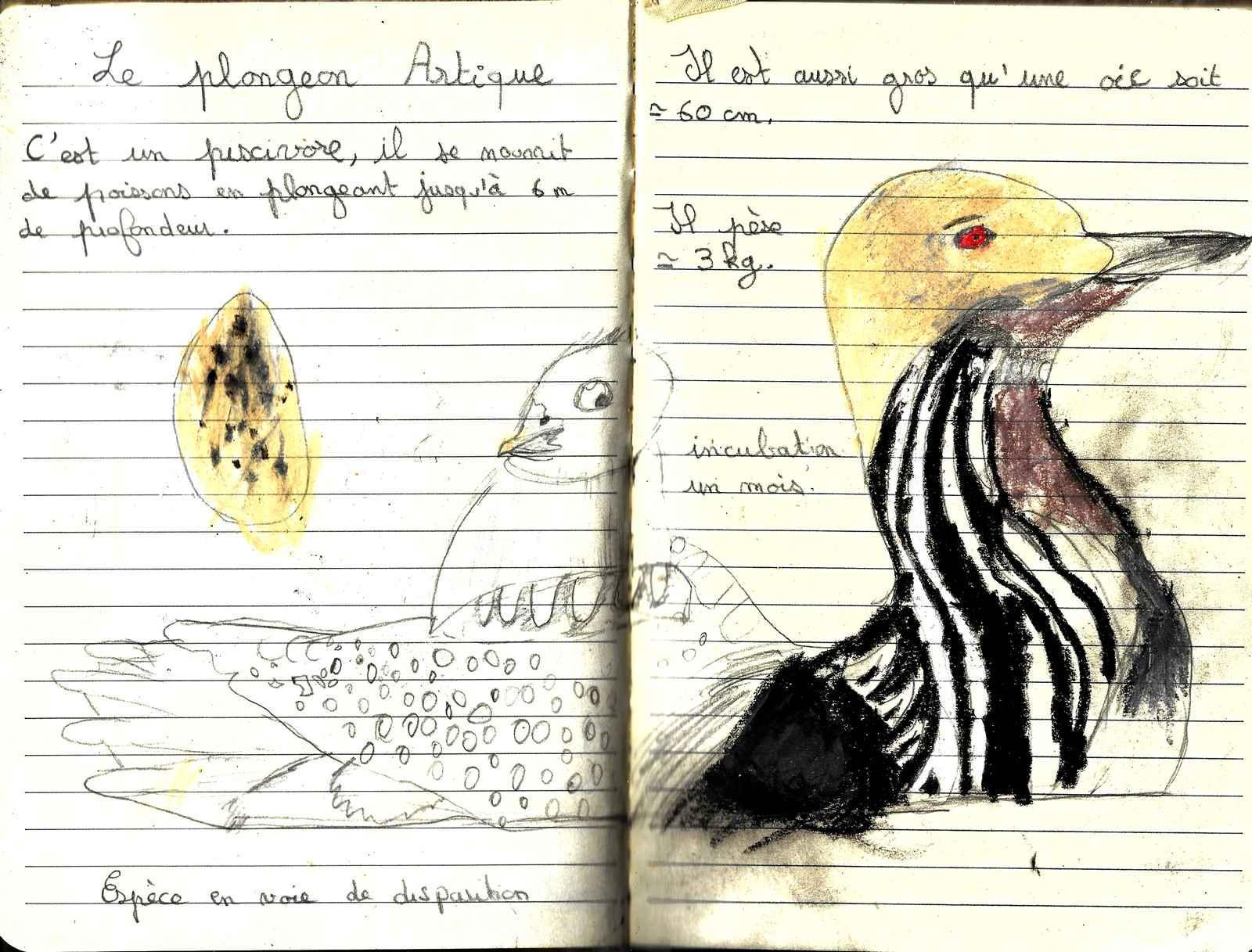 Dessin plongeon blog