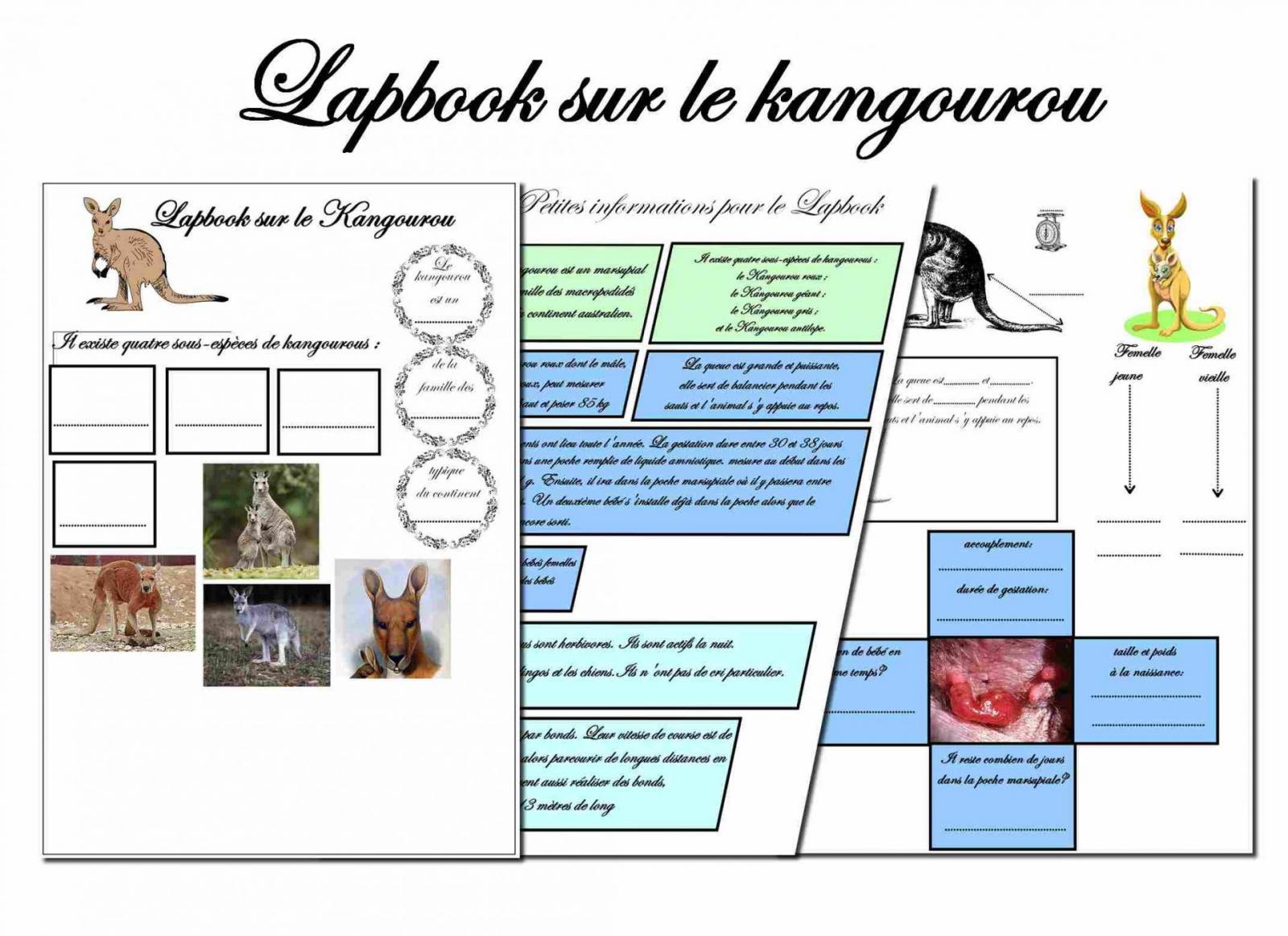 Lapbook kangourou 4
