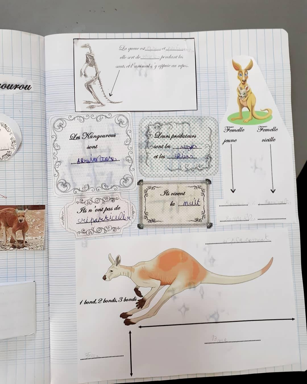 Lapbook kangourouimg 20200330 191355 644